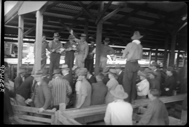 Meat Industry Authority in WA - Western Australian Meat Industry Authority